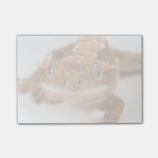 Gecko Stare Post-it Notes