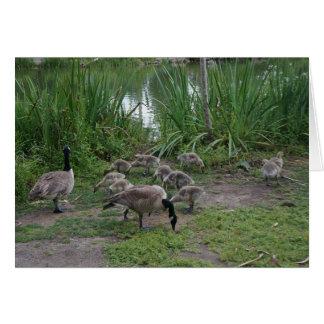 Geese and Goslings Card