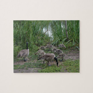 Geese and Goslings Jigsaw Puzzle