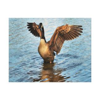 Geese at lake Canvas Print