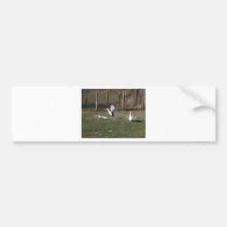 Geese fighting bumper sticker