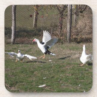 Geese fighting drink coasters