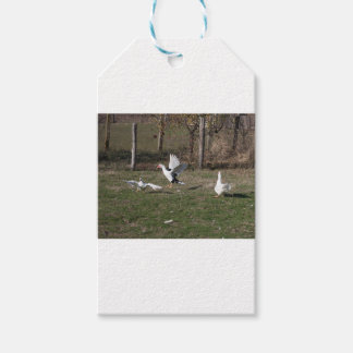 Geese fighting gift tags