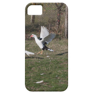 Geese fighting iPhone 5 case