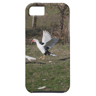 Geese fighting iPhone 5 cover