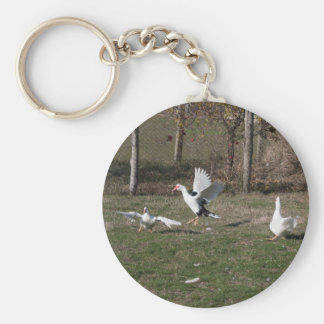 Geese fighting keychain