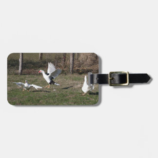 Geese fighting luggage tag
