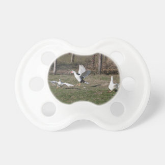 Geese fighting pacifier