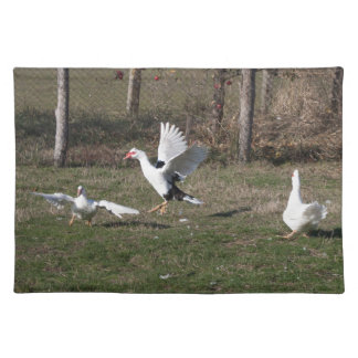 Geese fighting placemat