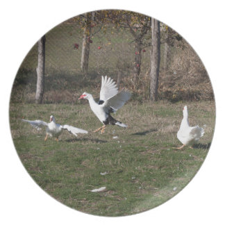 Geese fighting plate