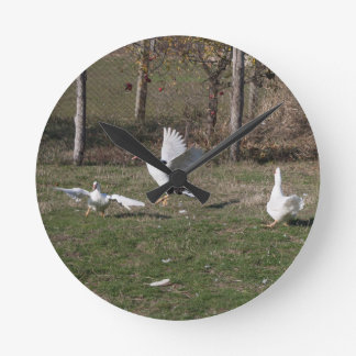 Geese fighting round clock