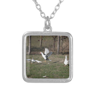Geese fighting silver plated necklace
