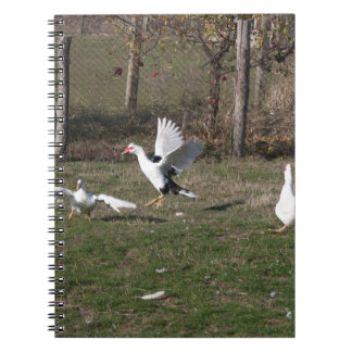 Geese fighting spiral notebook