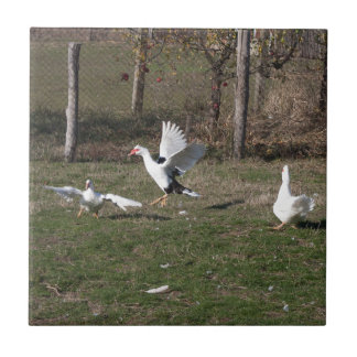 Geese fighting tile