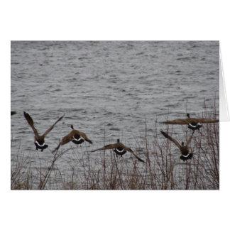 Geese in flight card