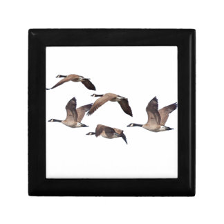 Geese in flight gift box