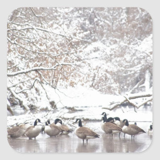 Geese in Snow Square Sticker