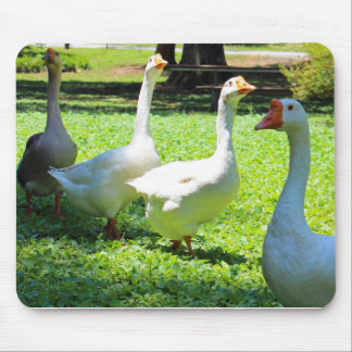 Geese Mouse Pad