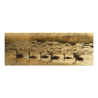 Geese on Golden Pond Photo Print