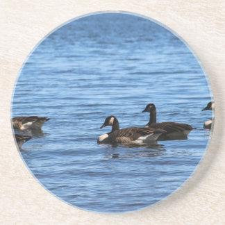 Geese on Lake Coasters