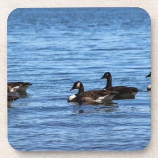 Geese on Lake Drink Coasters