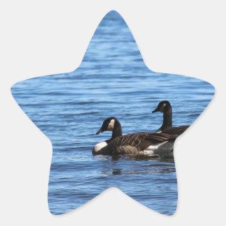 Geese on Lake Star Sticker