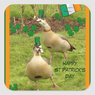 Geese performing a little Irish dancing Square Sticker