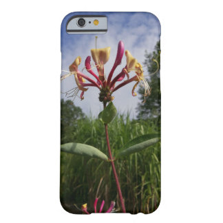 Geissblatt bloom and clouds barely there iPhone 6 case