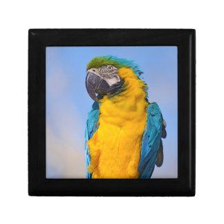 Gelbbrustara macaw on perch gift box