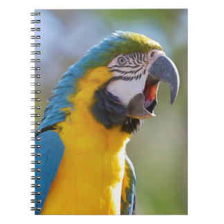 Gelbbrustara macaw on perch notebook