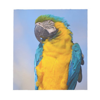Gelbbrustara macaw on perch notepad