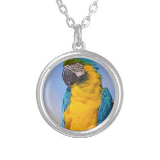 Gelbbrustara macaw on perch silver plated necklace