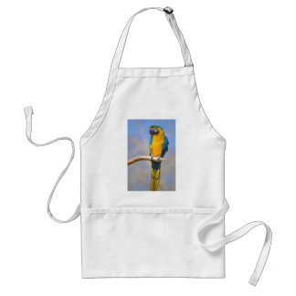 Gelbbrustara macaw on perch standard apron