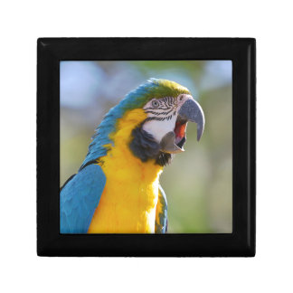 Gelbbrustara macaw on perch trinket box