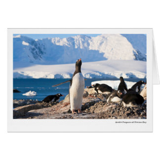 Gentoo Penguin at Dorian Bay Card
