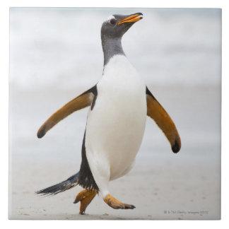 Gentoo Penguin Ceramic Tiles