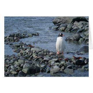 Gentoo penguin (M) card