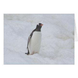 Gentoo penguin (Neko) card
