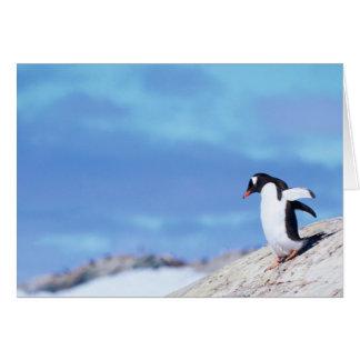 Gentoo Penguin - note card