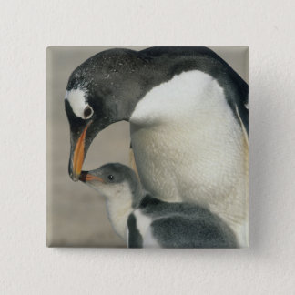 Gentoo Penguin, (Pygoscelis papua), adult 2 Inch Square Button