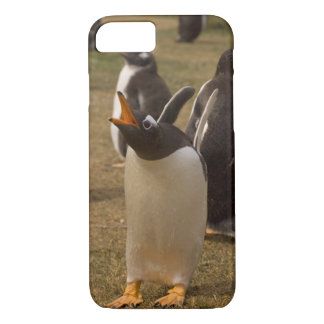 gentoo penguin, Pygoscelis papua, calling, iPhone 7 Case
