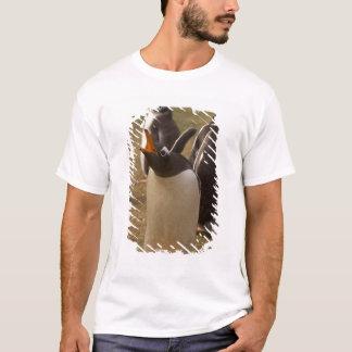 gentoo penguin, Pygoscelis papua, calling, T-Shirt