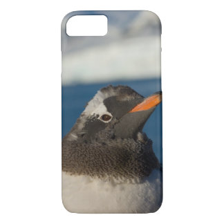 gentoo penguin, Pygoscelis Papua, chick along iPhone 7 Case