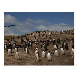 Gentoo Penguin (Pygoscelis papua) colony on West Postcard