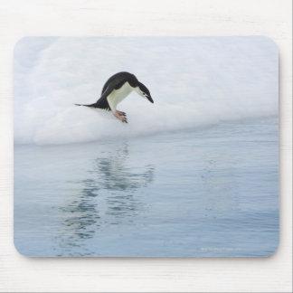 Gentoo penguin (Pygoscelis papua) Mouse Pad