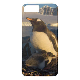gentoo penguin, Pygoscelis Papua, parent with iPhone 7 Plus Case