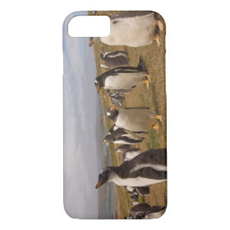 gentoo penguin, Pygoscelis papua, rookery on iPhone 7 Case