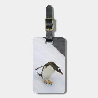 Gentoo penguin Pygoscelis papua) standing Luggage Tag
