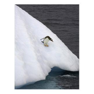 Gentoo penguin Pygoscelis papua) standing Postcard
