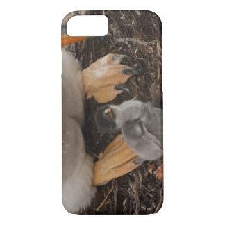 Gentoo Penguin (Pygoscelis papua) with chick, iPhone 7 Case